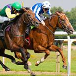 Pferderennen in Südafrika
