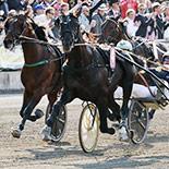 Pferderennen in Straubing