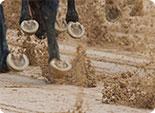 Sandbahnrennen bei JAXX